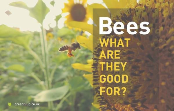 beesSM2