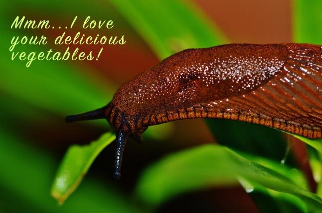 snail-1441138_1920 2.jpg