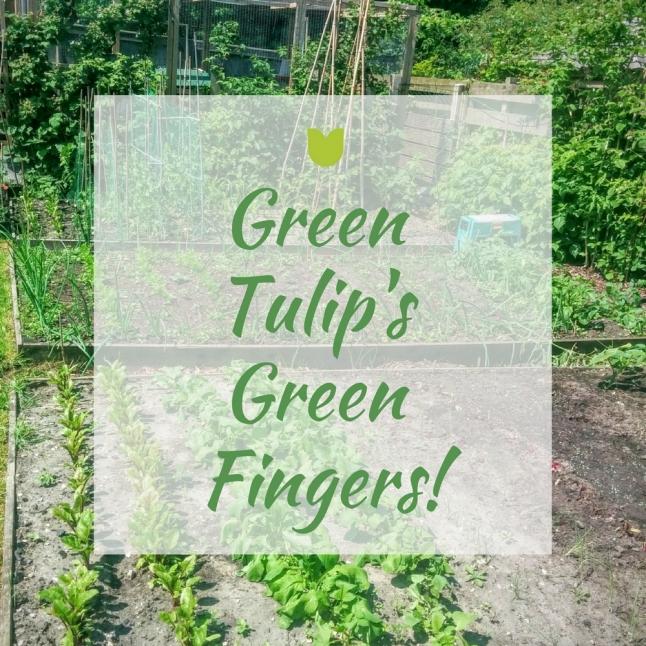 GREEN TULIP'S GREEN FINGERS